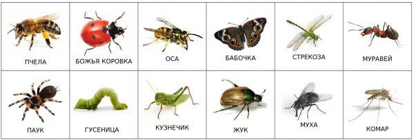 Насекомые (подписи на русском)