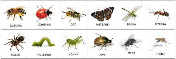 Насекомые (подписи на украинском)