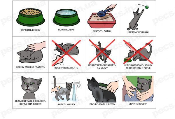 Кошка (на русском)