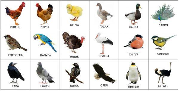 Птицы (подписи на украинском)