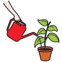 Карточка поливать цветы
