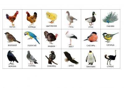 Птицы (подпии на русском)