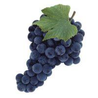 Виноград синий