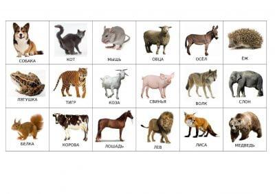 Карточки «Животные»